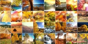 Usage Rights: Creating a Digital Photo Paper Trail
